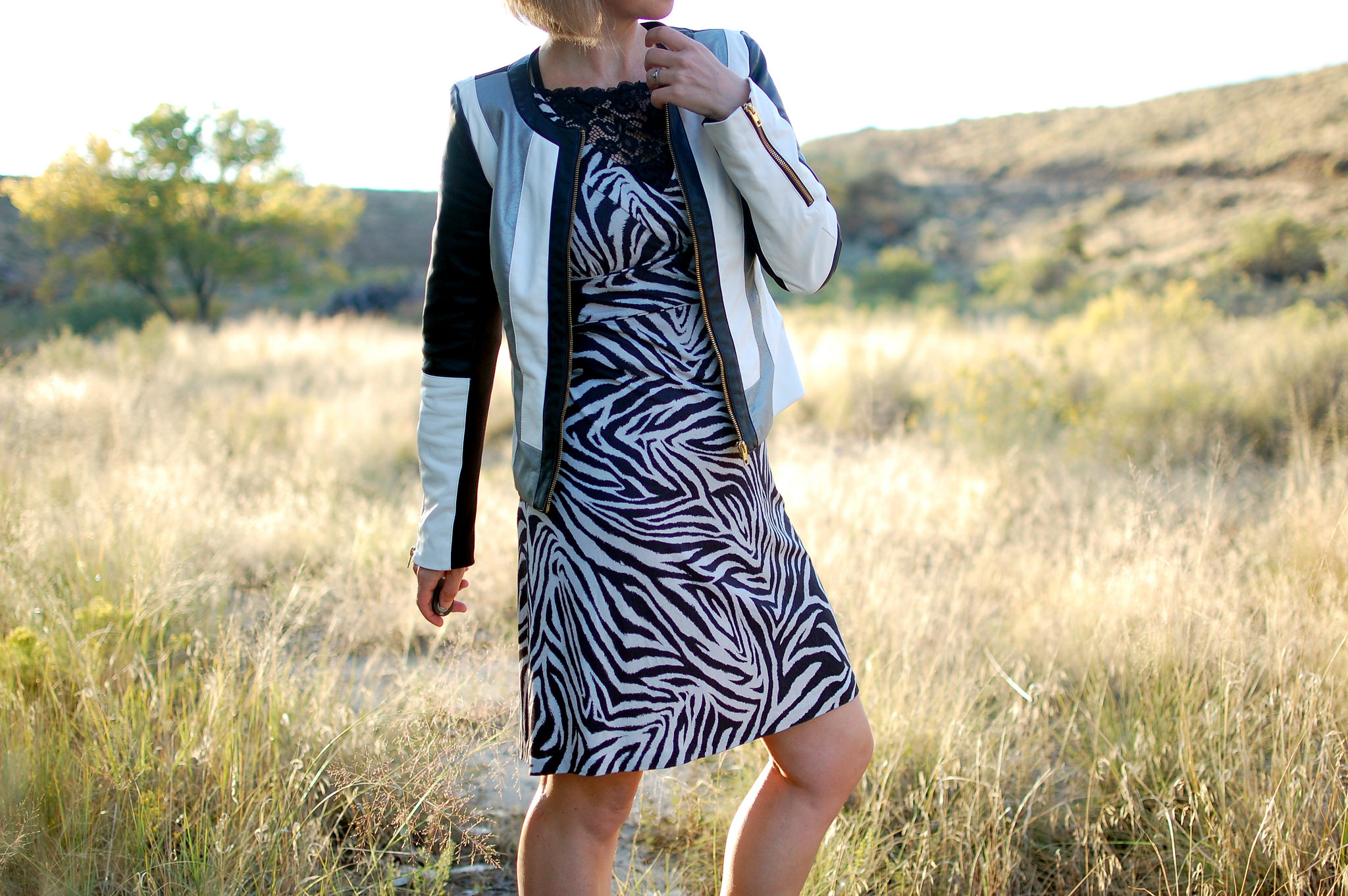 zebra striped dress moto jacket daily outfit blog ootd whatiwore2day